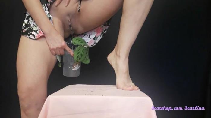 I plant a flower and fertilize it FullHD 1080p (Big pile, New scat, Scatting Girl, Shitting Ass /  2020) 339 MB